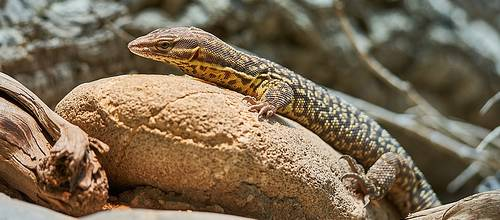 Skywatch Geos 11 - Reptiles - Animals